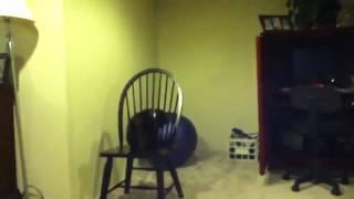 Кот и стул