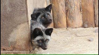 Как в Харьковском зоопарке праздновали Всемирный день счастья