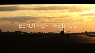 beauty of the birds teaser trailer aviation tribute movie
