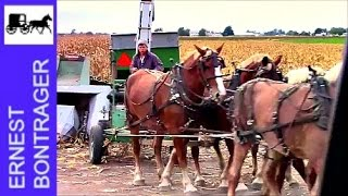 Amish 6 Horse Hitch Picking Ear Corn