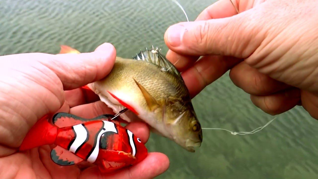 Robot rc robo fish nemo clown fish dead bait vs live for Buy clown fish