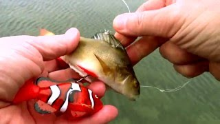 Pike vs robot RC ROBO FISH Nemo clown & dead bait. Underwater attack. Rare & weird ways of fishing.