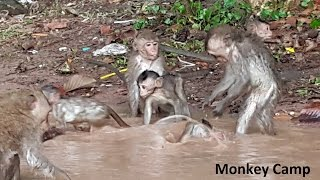 Little baby monkey playing water, baby monkeys jumping on the tree, Monkey Camp part 578