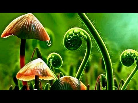 How Plants Communicate & Think - Amazing Nature Documentary