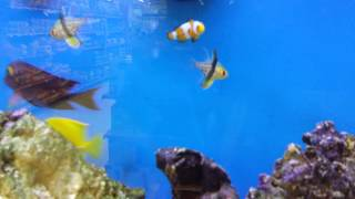 Finding Nemo 2 full movie
