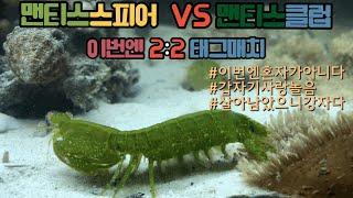 맨티스쉬림프 (스피어형2마리 ) VS 맨티스쉬림프 (클럽형 2마리) 이젠 태그매치다 | 전쟁 사랑 그리고 배신 | 2:2 떼거리 합사영상 mantis shrimp (언더워터티비)