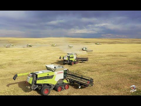 BIG TIME Colorado Wheat Harvest  12 Claas Lexion Combines