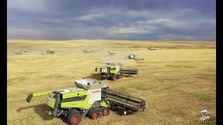 BIG TIME Colorado Wheat Harvest  12 Claas Lexion Combines