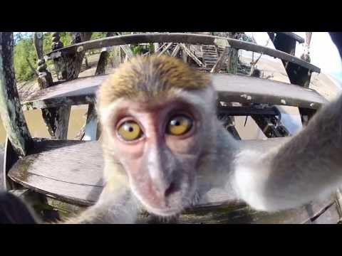 GoPro Best of Animals 2014