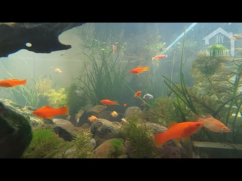 Make Fish Tank Outdoor