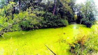Щука на ЖАБОВНИКЕ на ЧТО ловить Приманки для ловли щуки на болоте жабовнике пойменных озёрах