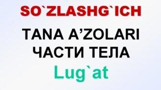 TANA A'ZOLARI. Русча узбекча лугат. ЧАСТИ ТЕЛА, Русско-узбекский словарь.