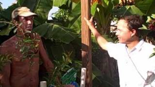 Growing Food in South Florida - Vegetable Garden in Grow Boxes and Moringa Trees