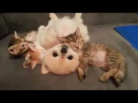 Pets Playhouse Kennel, Mumbai cats and dog best friends unbelievable video