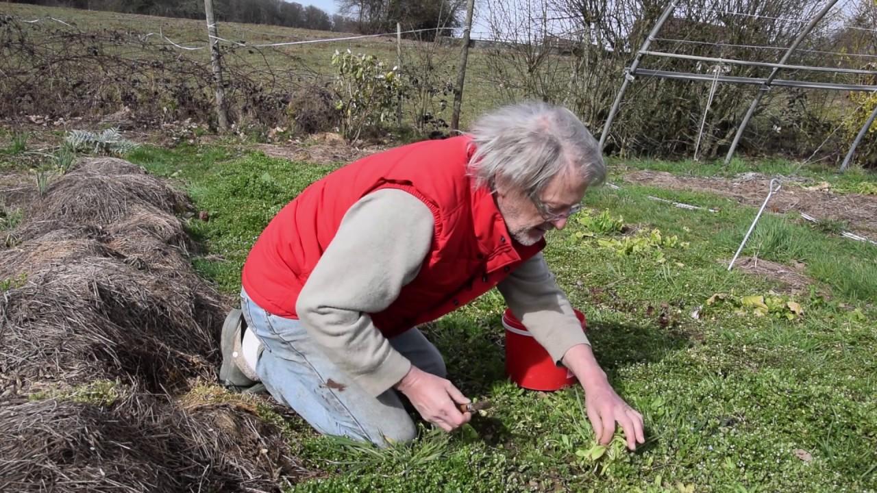 Le Potager du Paresseux : perfectionner la paresse ? (22 mars 2019)