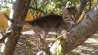 ВНИМАНИЕ! СРОЧНО! Помогите найти дом маленькому игривому котёнку! #Харьков