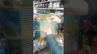 Зоотовары. Клетка для хомяка.Зоотовары от Лены гарантия лучшей цены(, 2016-10-26T09:26:01.000Z)