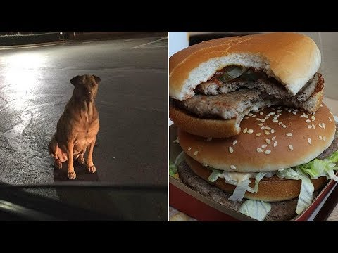Woman says 'gold diggin' dog escapes to McDonald's, pretends to be a hungry stray