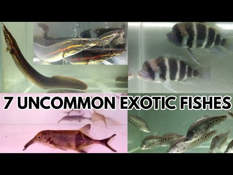 7 Uncommon Exotic Fishes at A Mart Aquatic World
