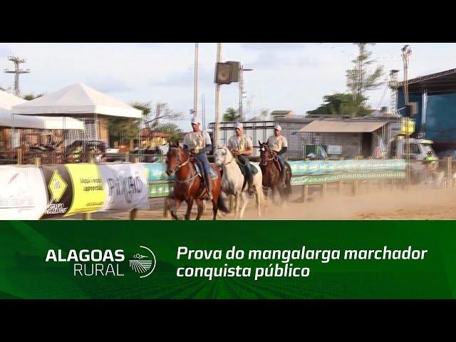 Prova do mangalarga marchador conquista público da Expoagro Alagoas