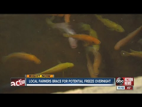Tropical Fish Farmer Braces For The Cold
