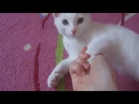 Funny Cats Compilation - Funny Cat Videos Ever - Funny Videos - Funny Animal Videos 2
