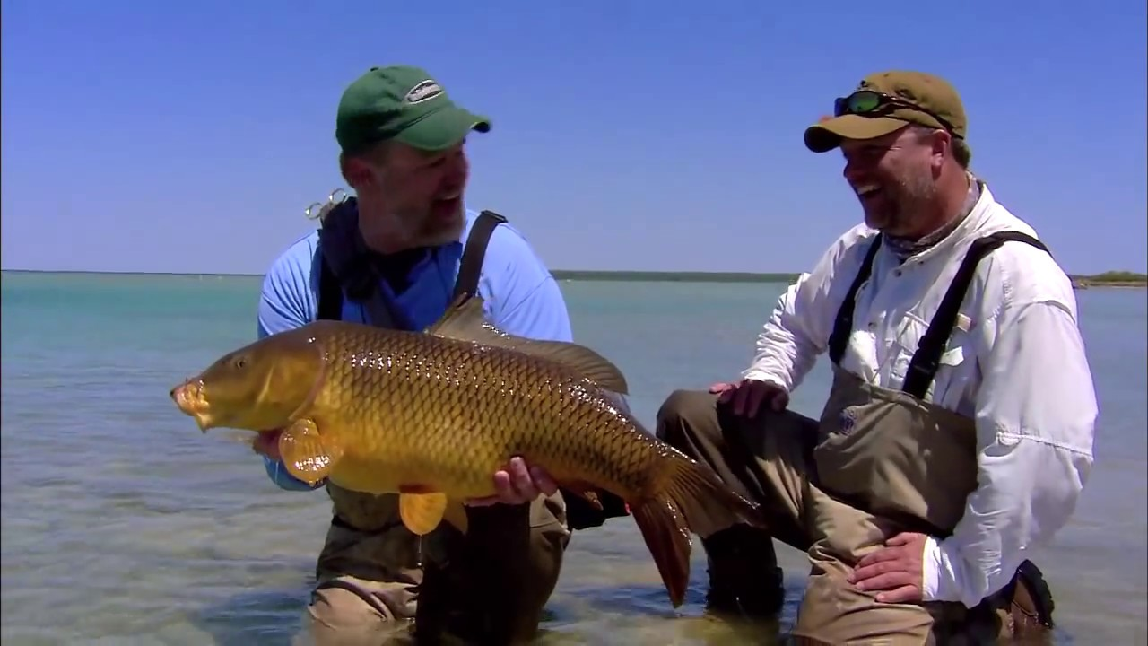 Amazing fly fishing carp action youtube for Michigan one day fishing license