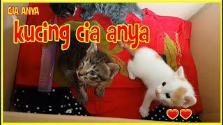 KUCING CIA ANYA - ANAK KUCING LUCU | FUNNY CAT | CIA ANYA