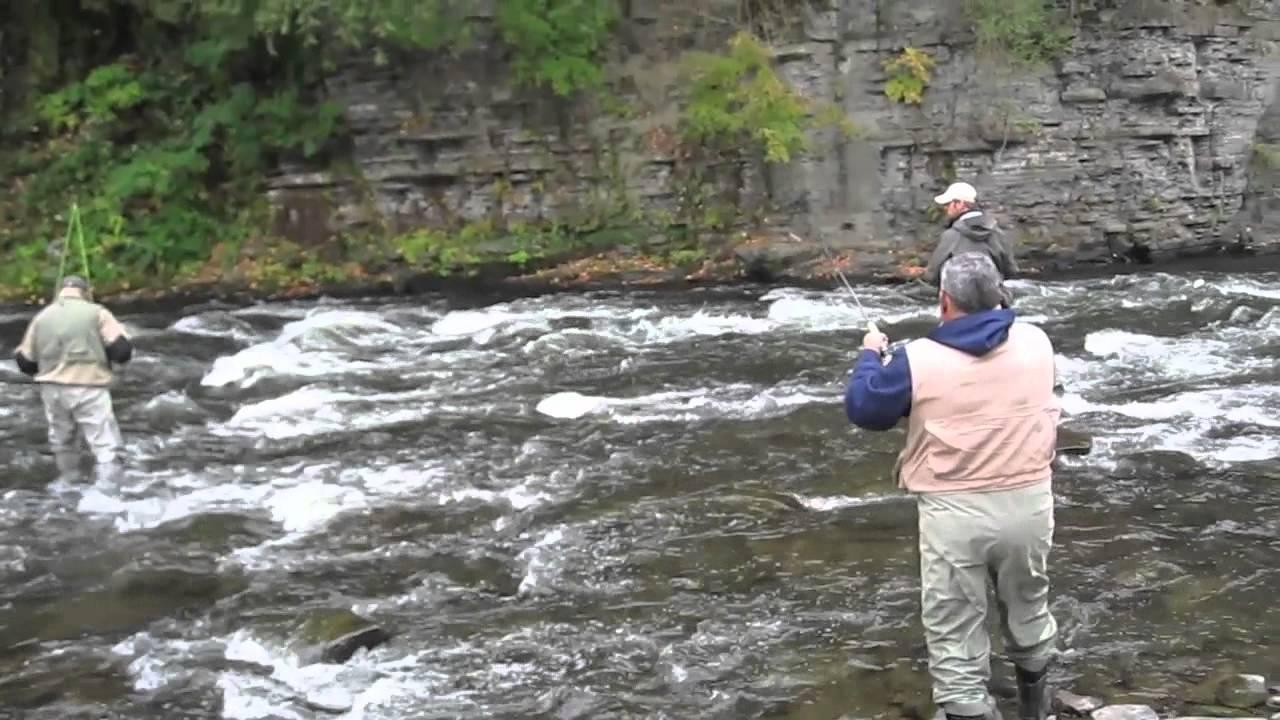 Carlos fishing salmon river pulaski ny youtube for Free fishing license ny
