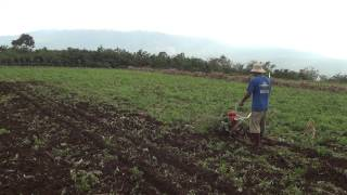 CY80 Tiller/Weeder 10-rotary tilling in harvested corn field with corn stubble-2 中耕機 中耕機