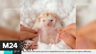 Актуальные новости России и мира за 18 сентября - Москва 24