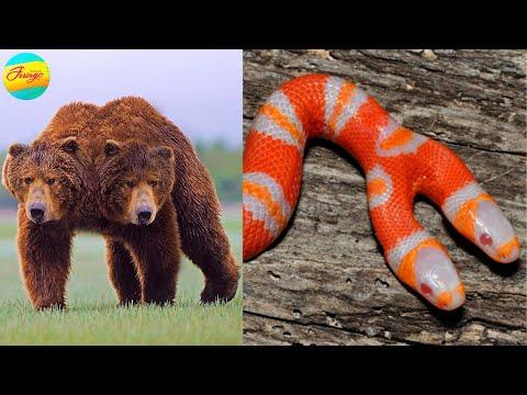 5 सबसे खतरनाक दो सिर वाले जानवार | 5 Weird Two Headed Animals
