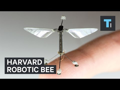 Harvard University is creating robotic insects to monitor the environment