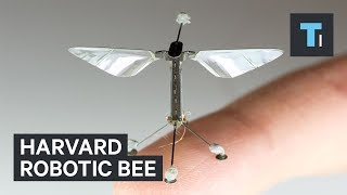 Harvard University​ is creating robotic insects to monitor the environment