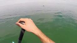 Dolphins in Corpus Christi Bay