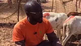 Vos moutons de l'EID 2018 - Episode 2 - La qualité des bêtes