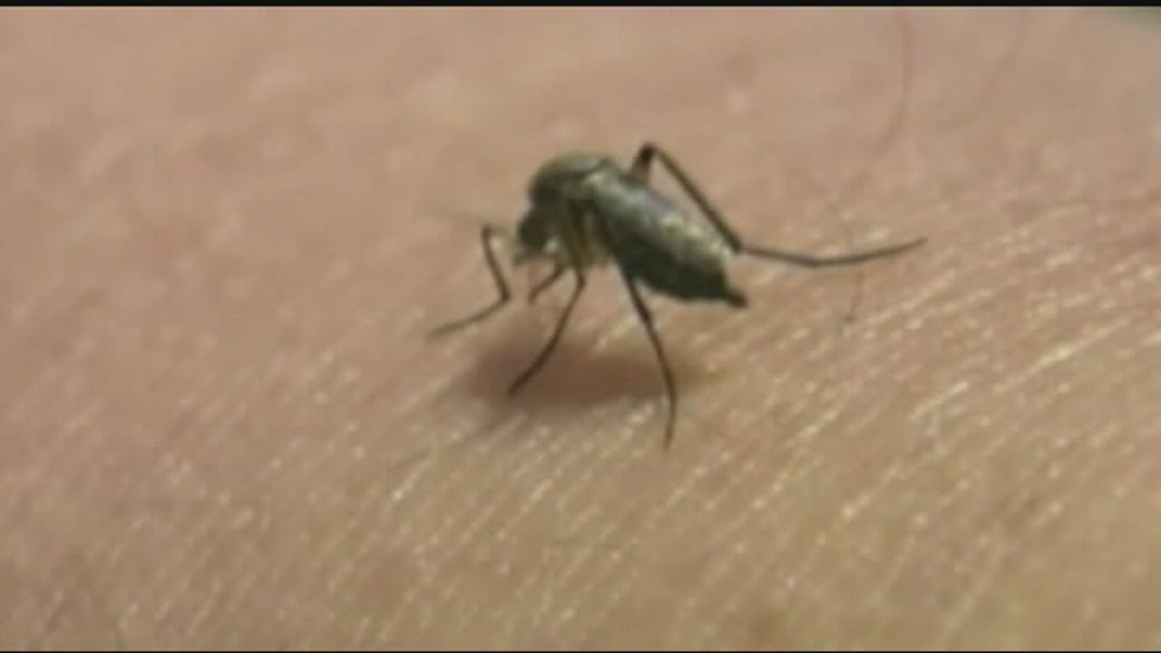 West Nile Virus found in East Longmeadow