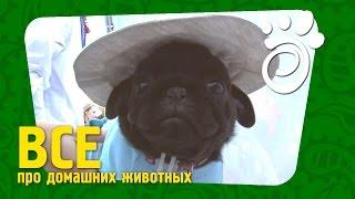 Дефиле А-ля Украина. Все О Домашних Животных