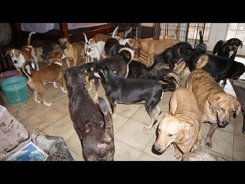 Manny's - Woman in Bahamas takes in nearly 100 dogs as Dorian approaches
