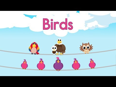 Bird Song LEARN ABOUT BIRDS