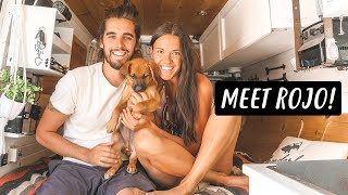 fostering-a-puppy-while-living-in-a-van