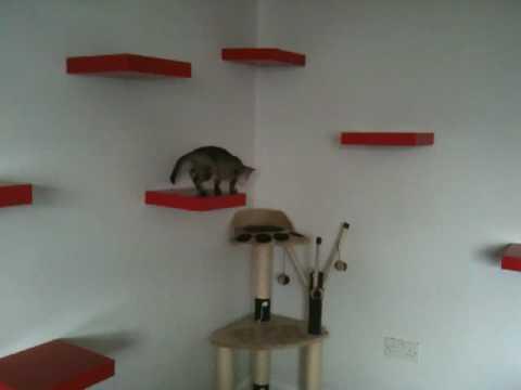 Kitten on Ikea (cat) shelves.