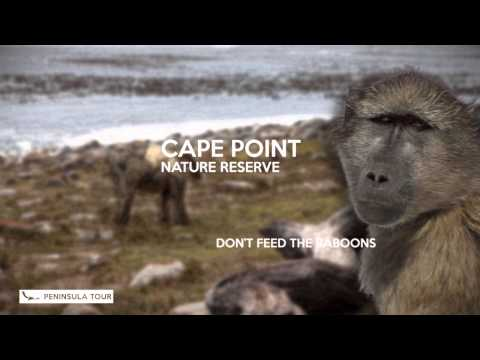 Cape Town Peninsula tour, by African Eagle DayTours