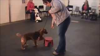 Pawesome Dog Training Cumbria Thursday Night Class