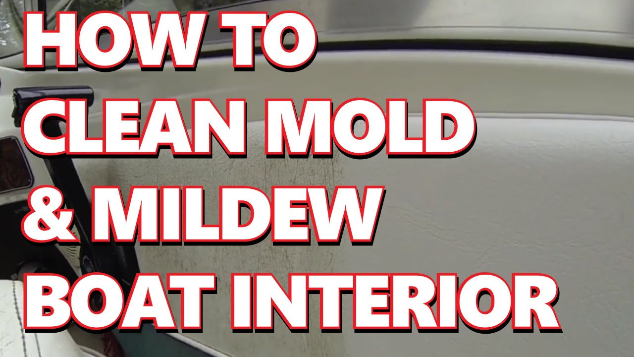 How To Remove Mold Stains From Car Carpet Www