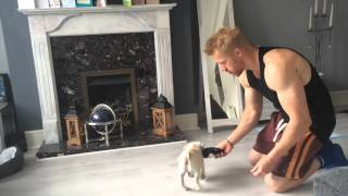 Pug puppy training part 4