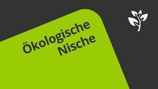 kologische nische bedeutung biolog 3 years ago - Okologische Nische Beispiel