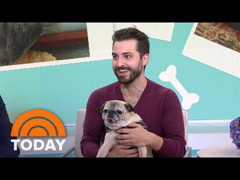 Is It A 'Bones' Or 'No Bones' Day? Meet Noodle, TikTok's Predictive Pug