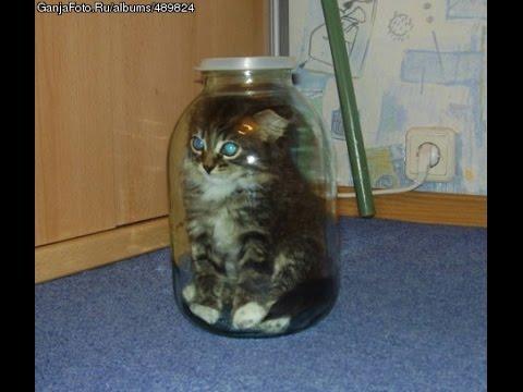 Приколы над котами 2017 Новинка – до слез