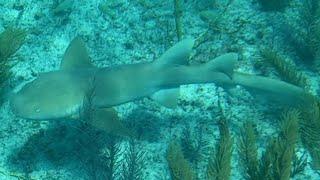 Atlantic Hunt, Aimrite, Rob Allen, Barracuda, Hog Fish, Lobster, Permit